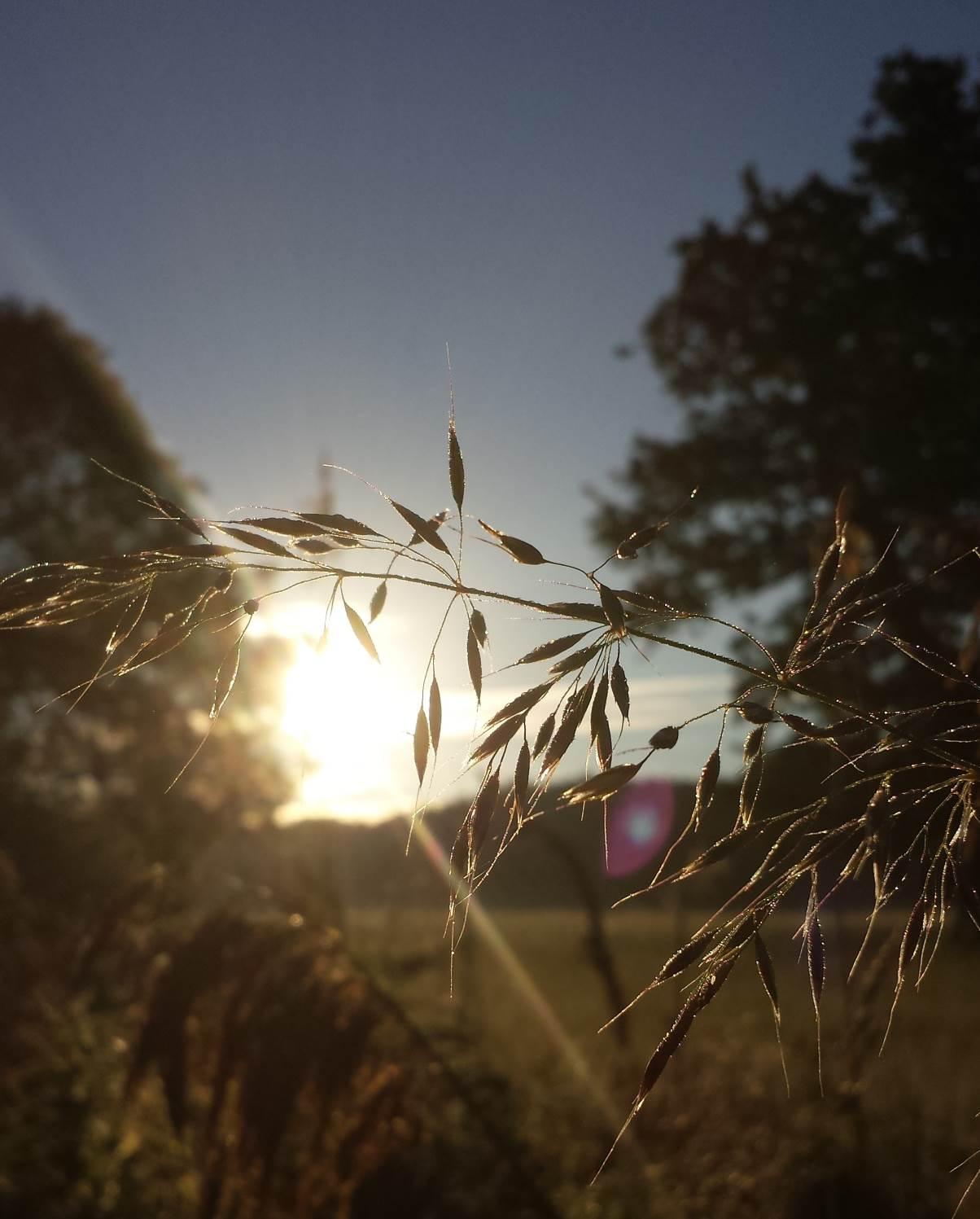 kentwell sunrise